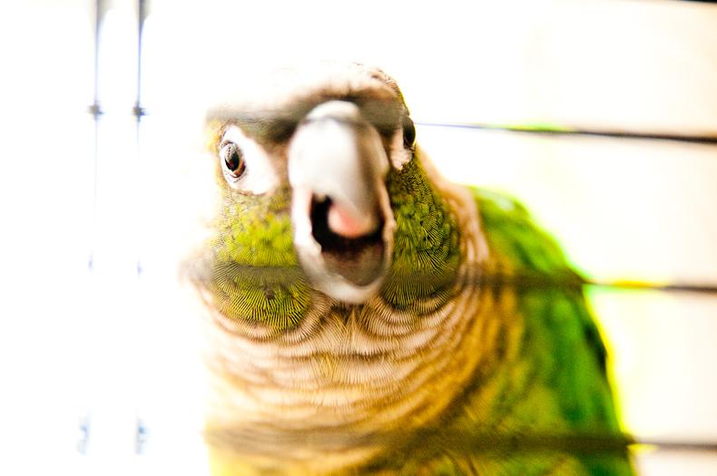 Sidney, squawking.  Big suprise